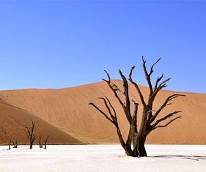 arbre séché dans le désert